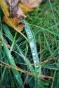 Herbst fetzt - Tautropfen
